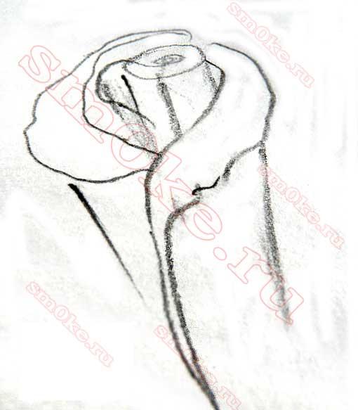 как научиться рисовать розу карандашом: