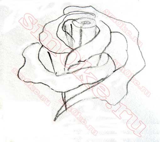 Как нарисовать розу карандашом: этап 4: sm0ke.ru/kak-narisovat-rozu-karandashom.html
