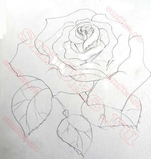Как нарисовать розу карандашом этап 6